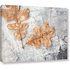 Elena Ray Still Life Two Leaves Gallery-Wrapped Canvas Art, Size: 24 x 36, Silver