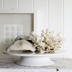 i have to try this arrangment with some of my shells. looks beautiful.