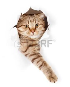 cat paw: cat in white wallpaper hole Stock Photo Cat Wallpaper, White Wallpaper, Calming Cat, Best Friend Pictures, Here Kitty Kitty, Cat Paws, Cat Grooming, Cat Tattoo, Pet Shop