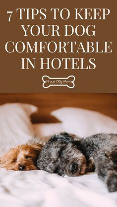 7 Tips To Keep Your Dog Comfortable In Hotels Proud Dog Mom Dog Care Dog Travel Dog Training Obedience