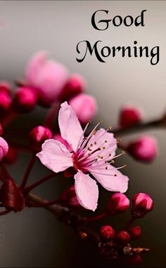 Good Morning Flowers, Good Morning Images, Good Morning Quotes, Sunday Images, White Food, Baked Yams, Grilled Asparagus, Good Foods For Diabetics, Morning Wish