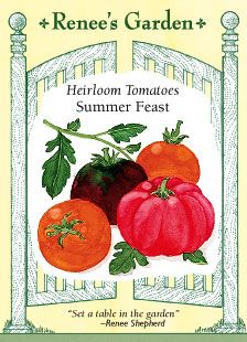 """Tomatoes, Heirloom """"Summer Feast"""" (mix). Color-coded seeds for a colorful trio of treasured heirlooms: Richly-flavored Black Krim, the most delicious of the """"black"""" tomatoes; big, meaty, glowing orange Sweet Persimmon and deep-red, lobed, traditional Italian Costoluto Genovese. www.reneesgarden.com/seeds/seeds-hm/vegT.htm#toma"""