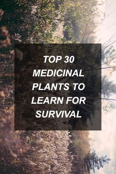 Not just survival but for everyday use to save tons of money on everyday over the counter medicines. Top 30 Medicinal Plants To Learn For Survival Survival Food, Homestead Survival, Wilderness Survival, Camping Survival, Outdoor Survival, Survival Prepping, Emergency Preparedness, Survival Skills, Survival Quotes