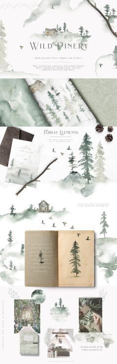 Wild Pinery Collection - Illustrations - 1