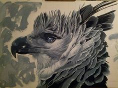 Magnificent use of color and strokes!  Harpy eagle found on Deviant Art. (If I were to guess, I'd say this photo was the reference: https://40.media.tumblr.com/tumblr_lz1mkmOMHZ1qmzs3bo1_500.jpg)
