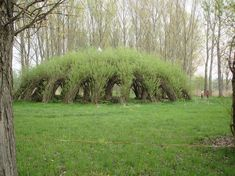 Marcel Kalberer :(Germany)  live willow (super organic) architecture