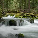 Lower Big Quilcene Trail is a 6.2 mile trail located near Quilcene