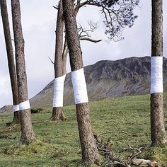 "#Inspiration Zander Olsen's Tree Line project 🌲🌲— ""This is an ongoing series of constructed photographs rooted in the forest. These works, carried out in Surrey, Hampshire and Wales, involve site specific interventions in the landscape, 'wrapping' trees with white material to construct a visual relationship between tree, not-tree and the line of horizon according to the camera's viewpoint."" Regram @clobird ☁️"