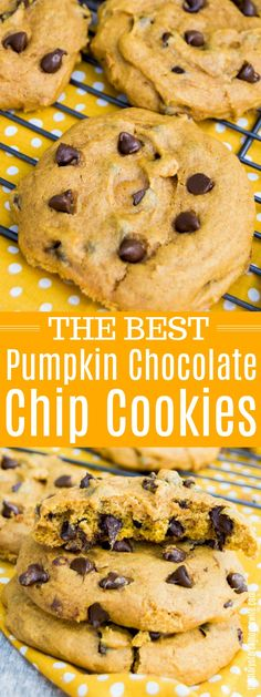 Top 10 Chocolate Chip Cookie Recipes To Tantalize Your Taste Buds! - The Best Pumpkin Chocolate Chip Cookies Perfect Chocolate Chip Cookies, Pumpkin Chocolate Chip Cookies, Chocolate Chip Recipes, Homemade Chocolate, Pumpkin Cake Cookies Recipe, Healthy Pumpkin Cookies, Healthy Pumpkin Recipes, Pumpkin Spice Cookies, Homemade Vanilla