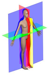 Anatomical plane - Wikipedia, the free encyclopedia