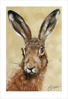 HARE Wildlife Portrait by award winning by JohnSilverFineArts