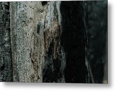 """""""Seasoned Bark"""" Nature photography on a Metal Print by Valerie Rosen Photography. Earth tones for your interior decor."""