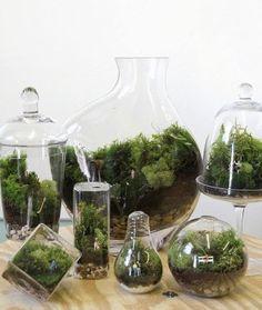 Terrarios: ideales para el interior del hogar.