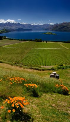 Rippon Winery - Looking onto Lake Wanaka, South Island , New Zealand