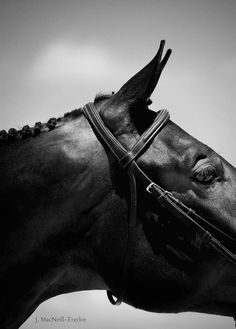 the-love-of-horses:  (via Listening by Jennifer MacNeill Traylor / 500px)