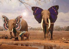 Butterfly Elephants