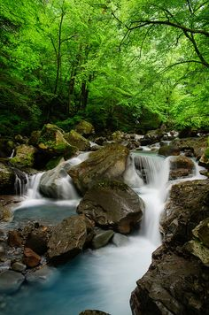 Tochigi, Japan #緑 #Green
