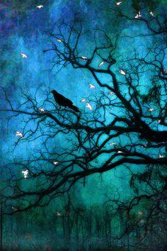 Black Bird Blue Night