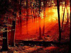 Red sky shining true the trees..