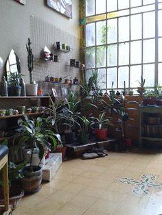 El Argel Vivero Boutique: Cultivar plantas de interior