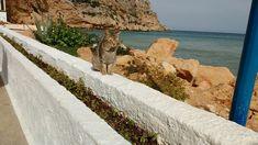 Kangaroo, Photography, Animals, Animales, Animaux, Photograph, Fotografie, Animal, Fotografia