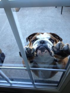Awwww...somebody please let this cutie in!