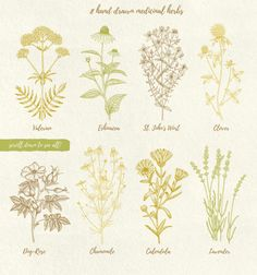Herbalitica Vintage Plants by Bantiq Vision on @creativemarket