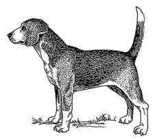 The Norfolk Spaniel or Shropshire Spaniel is a breed of dog extinct since the early 20th century. It was originally thought to have originated from the work of one of the Dukes of Norfolk, but this theory was disproven after being in doubt during the later part of the 19th century.