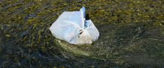 California Plastic Bag Ban Would Be First In The Nation!!! support as much as you can... we are just pushing for the last signature.