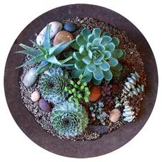 "Succulent arrangement  I created yesterday after a visit  to a wonderful cactus nursery called ""La Unión"".  I used an old rusty sowing plate (about 16 inches in diameter)  that I bought at the junk yard  to hold all my newly acquired treasures.  I was inspired by some amazing vessels  by Big Red Sun, a nursery in Austin, TX."