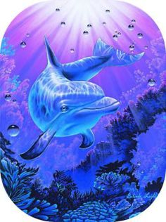 """Dreamer"" by Belinda Leigh Category:  Dolphins"