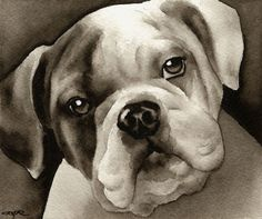 BULLDOG+PUPPY+Watercolor+Painting+Dog+ART+Signed by David J. Rogers