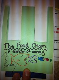 Stuff Students Say and Other Classroom Treasures: Food Chain Pop-Up for Science Lapbooks