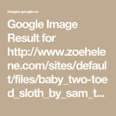 Google Image Result for http://www.zoehelene.com/sites/default/files/baby_two-toed_sloth_by_sam_trull_for_cosmic_sister_1.jpg?1441137014