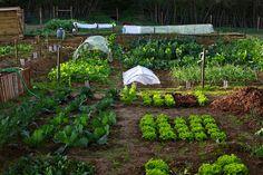 As hortas do Convento | Flickr - Photo Sharing!