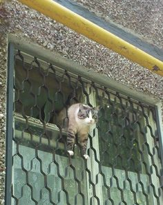 This cat in a not-so-great escape: | Community Post: 16 Clumsy Cats Who Definitely Have Less Than Nine Lives Left