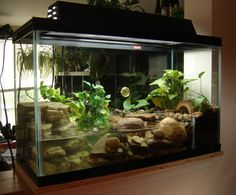 Fire Belly Toad Tank Setup | Post Your Firebelly Toad Tank Pics