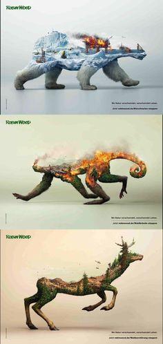 Door ontbossing verliezen dieren hun biotoop. Ze kunnen ook nergens gaan. Dus dieren verdwijnen meer en meer.