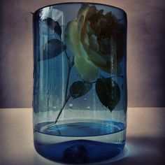 Rose. Blue. 11th May 2014.