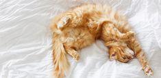 20 imágenes de gatos durmiendo que te sacarán una sonrisa