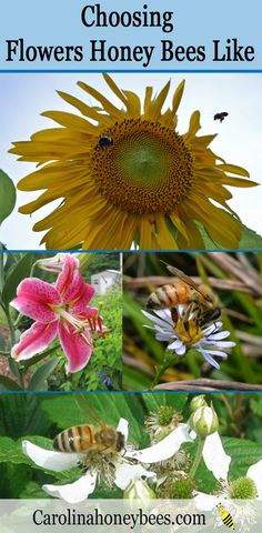Choosing Flowers Honey Bees Like –  It Doesn't Have to Be Hard Work