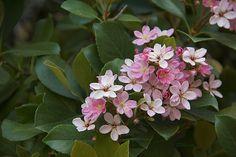 Pink Flowers Macro