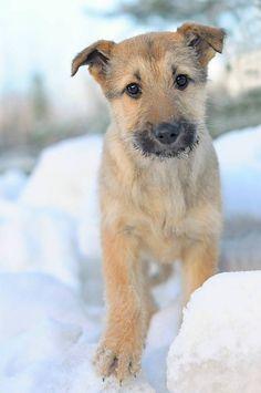 Kodittomat Koirat - Betti Ruf