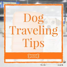 Planning on traveling with your dog? Check out these great traveling tips for long drives and plane rides! Pet Travel, Travel Info, Rv Camping Tips, Foto Blog, Plane Ride, Long Car Rides, Traveling Tips, Just Breathe, Dog Training