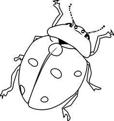 ladybug coloring picture