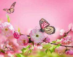 Farfalle Sfondi gratuiti (101 foto sul desktop) per la visualizzazione di famiglia - data