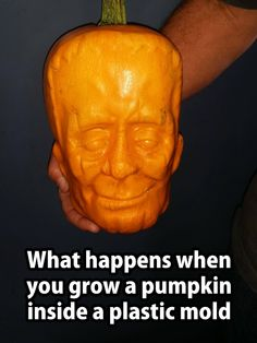 What happens when you grow a pumpkin inside a plastic mold