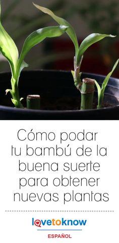 Feng Shui, Aries, Sweet, Garden, Vestidos, Succulents, Bamboo Plants, Jade Plants, Growing Plants