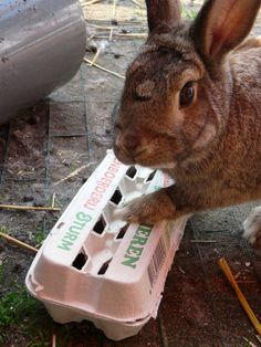 hide treats or hay in an egg carton and tie it closed and you fuzzy friend will do the rest