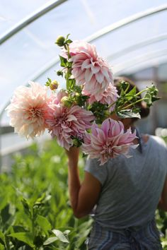 Cafe au Lait Dahlias Floret Flower Farm, look at the size of those flowers!!! The color looks really great too.
